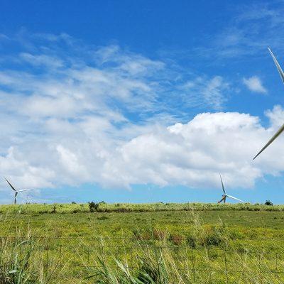 Tall White Windmills Turning in a Green Field, Big Island, Kapaau, Hawaii