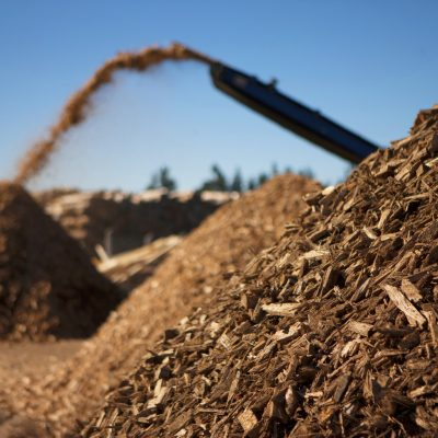 Biomass fuel of the future